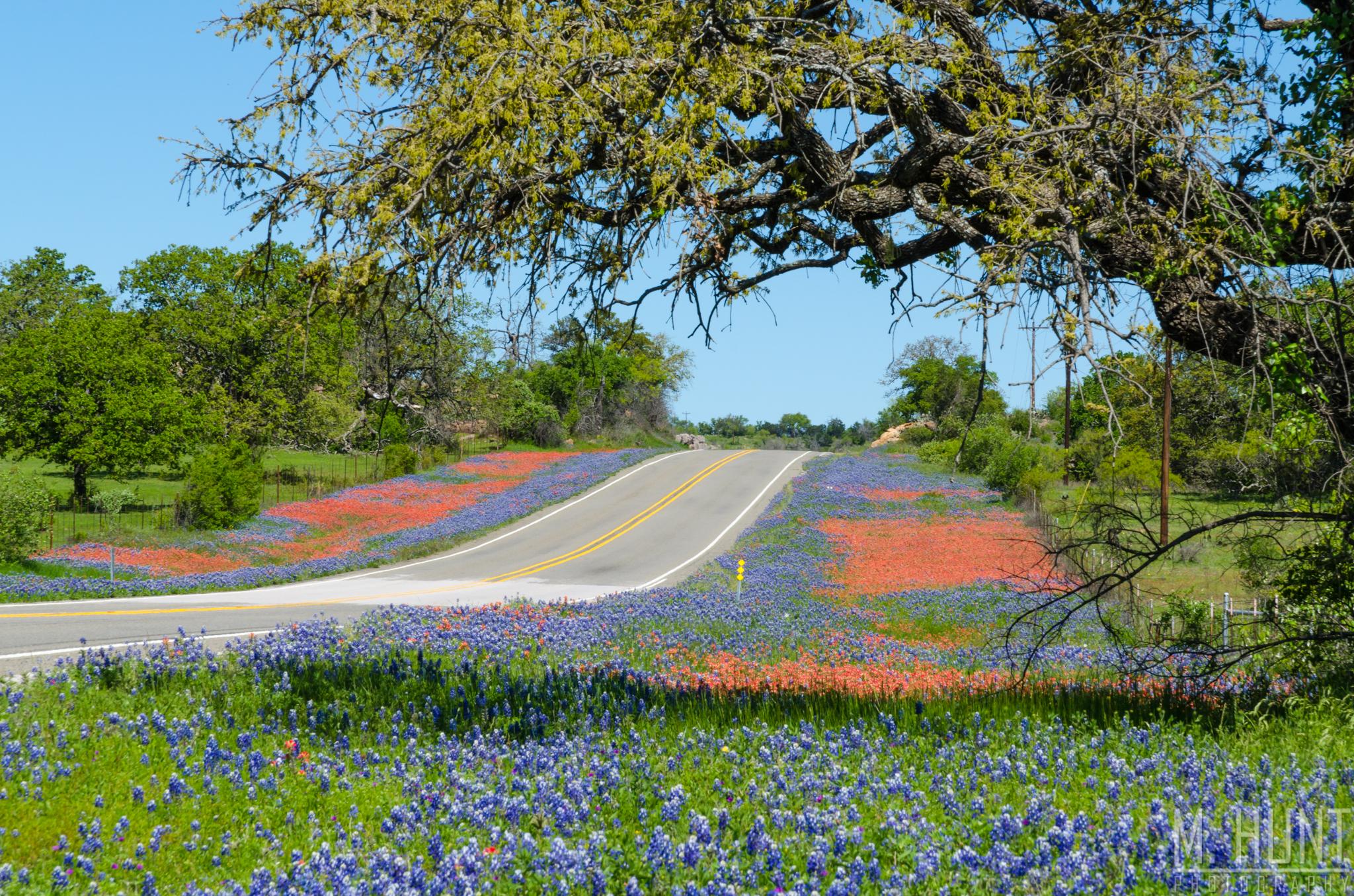 Texas Wildflowers – Huntstyle